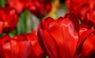Dem Partner einfach online Blumen schicken